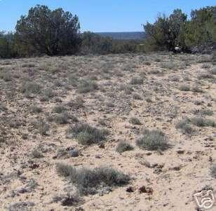 1.01 ACRE LOT IN APACHE COUNTY, ARIZONA