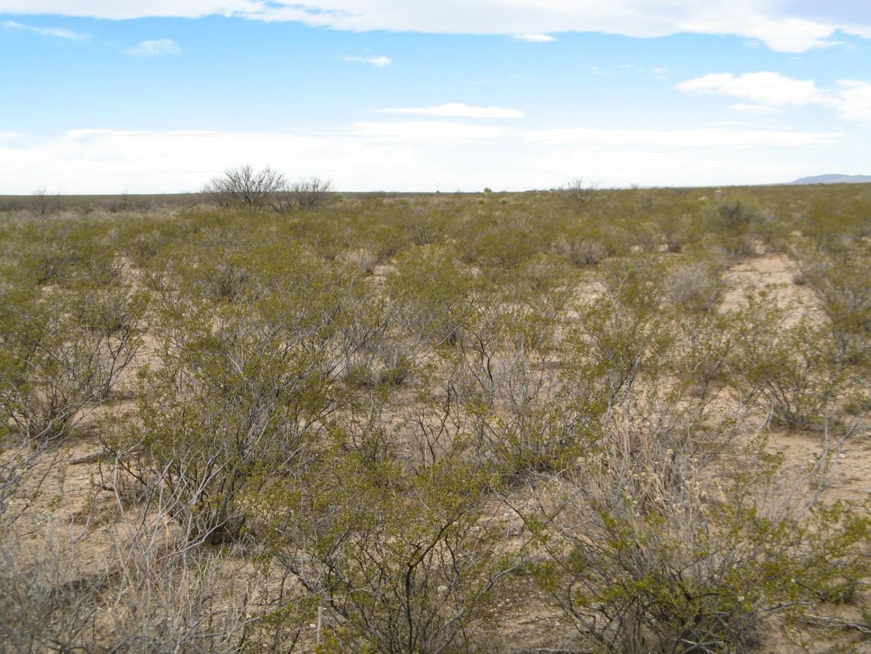 SOLD - 10 Acres for Sale in Sierra Blanca, TX
