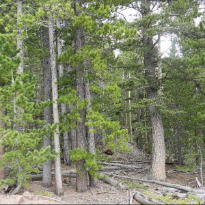 1.49 ACRE LOT IN COSTILLA COUNTY, COLORADO
